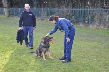 how to become a dog handler k9 in bc